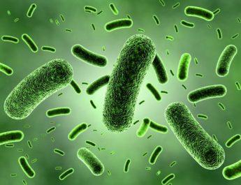 Segudang Manfaat Bakteri Baik Bagi Tubuh